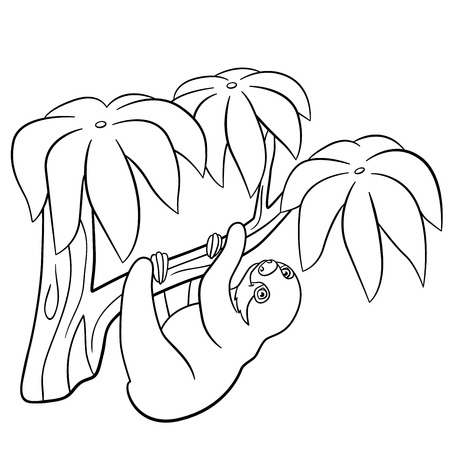 coloring pages little cute baby sloth hangs on the tree branch