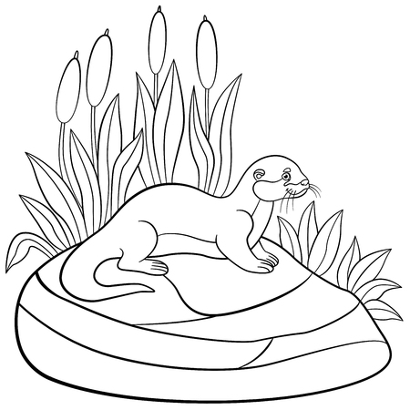 Coloring pages. Little cute otter stands on the stone and smiles.