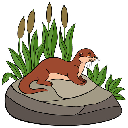 nutria caricatura: Cartoon animals. Little cute otter stands on the stone and smiles.
