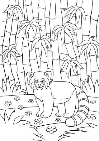 Coloring Pages. Little Cute Red Panda Sits On The Stone In The ...