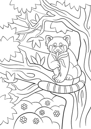 eats: Coloring pages. Little cute red panda sits on the tree branch and eats leaves.