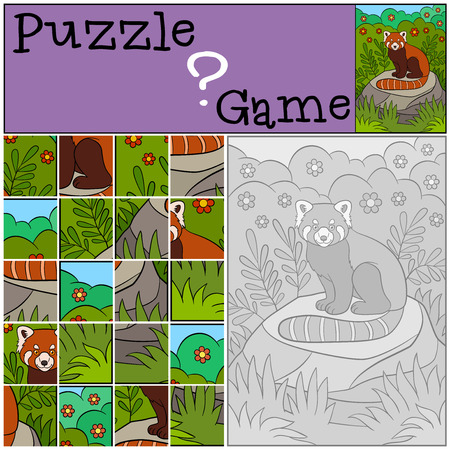 preliminary: Education game: Puzzle. Little cute red panda sits on the stone in the forest and smiles.