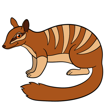 Cartoon animals. Little cute numbat stands and smiles.