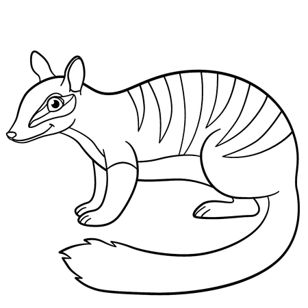Coloring Pages. Little Cute Numbat Stands And Smiles. Stock Vector    83311969