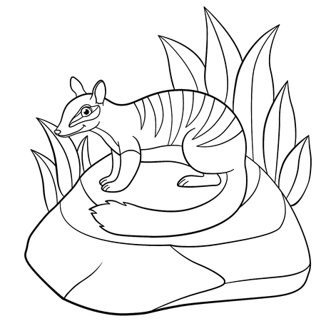 #83311990   Coloring Pages. Little Cute Numbat Sits On The Stone And Smiles.