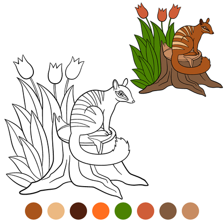 Coloring page. Little cute numbat sits on the stump and smiles.