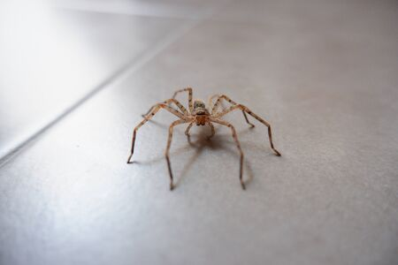 Spider on the tile