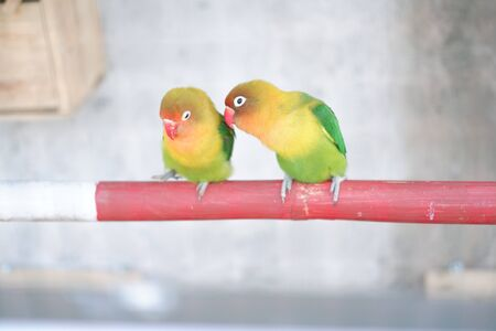 beautiful and charming love birds