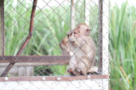 monkey in the cage as a background