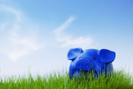 A piggy outside on the grass  and blue sky  Stock Photo