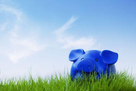 Ein Piggy außerhalb auf das Gras und blauer Himmel