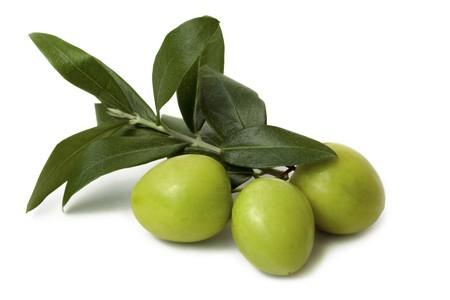 Green Olive Branch isolated on white Background Stock Photo