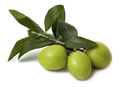 Rama de olivo verde aislados en fondo blanco