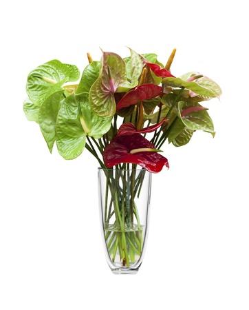 AnthuriumFlamingo Blumen in einer Glasvase, isoliert auf weiss.