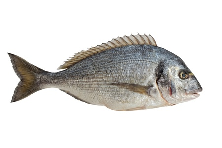 Dorado Fisch isoliert auf weiß Lizenzfreie Bilder