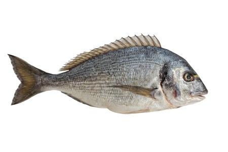 vis: Dorado Vis op wit wordt geïsoleerd Stockfoto
