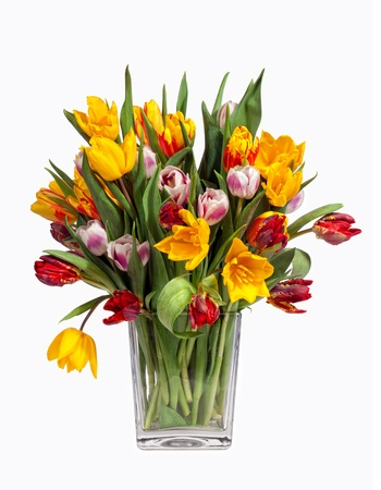 Spring Tulips Bouquet in glass vase, isolated on white
