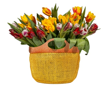 Spring Tulips Bouquet in shopping bag, isolated on white  photo