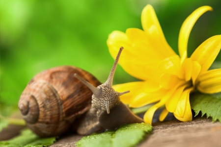 pet photography: Close up of a Snail in a garden  Stock Photo