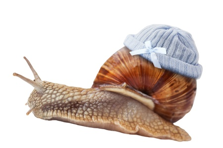 Baby snail wearing blue knit wool hat, isolated on white photo