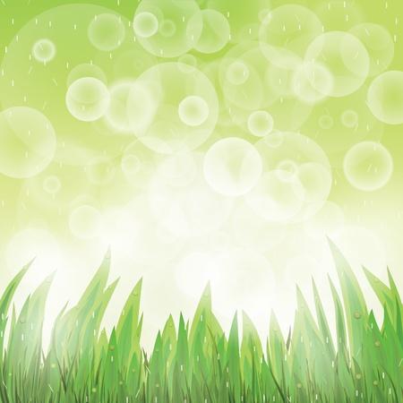 ochtend dauw: Green natuurlijke achtergrond met gras en regen