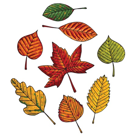 green leafs: Autumn leafs  Illustration
