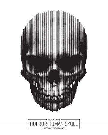 Realistic Illustration of Human Skull