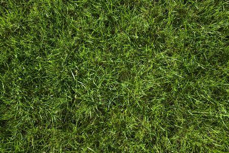 green grass taken from top photo