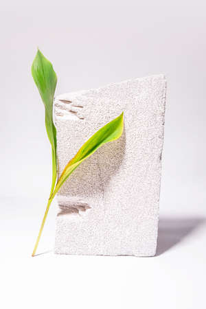 Still life style background with cement stone and green natural leaves. Modern photo. White background. Textured wallpaper. Natural style banner. High quality photo Foto de archivo