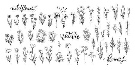 Wildflower line art set. Flower doodle botanical collection. Herbal and meadow plants, grass. Vector illustration isolated on white background. Chamomile, clover, daisy simple hand drawn elements.