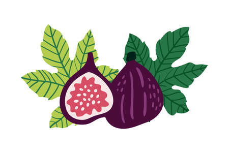Figs vector illustration. Half of figs, seeds and leaves in cartoon style. Isolated on white background.  イラスト・ベクター素材