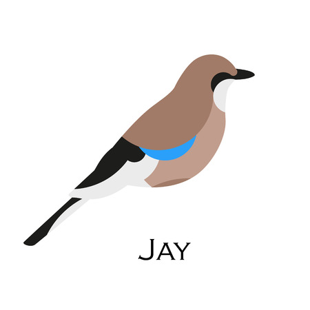 Jay vector icon. Flat design.