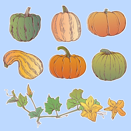 Cartoon pumpkin set. Different shapes and sizes.