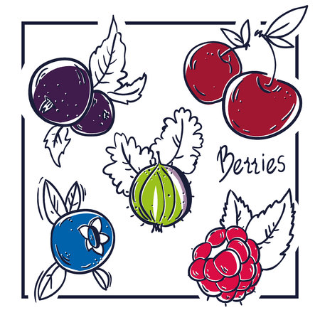 Berry fruit icon collection - Raspberry, Cherry, black currant and gooseberry