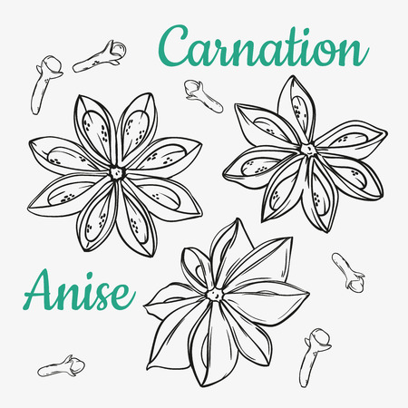 Star anise and carnation. Vector drawing. Hand drawn sketch. Cooking and aromatherapy ingredient.