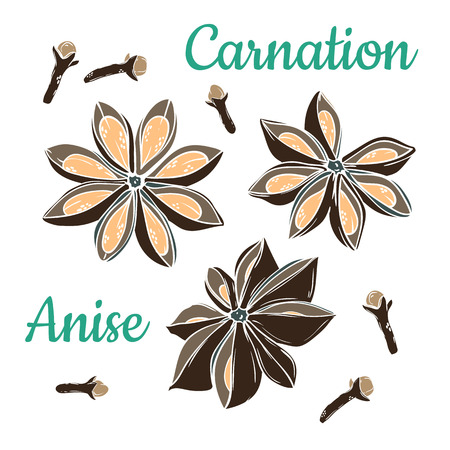 Star anise and carnation. Vector drawing. Coloring Hand drawn sketch. Cooking and aromatherapy ingredient. Illustration