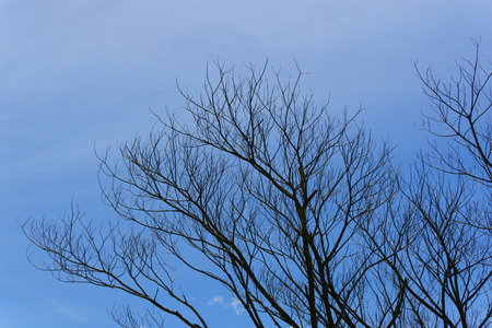 branch of dead tree with beautiful blue sky and cloud background.