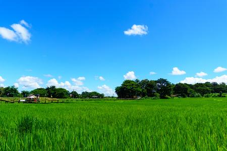 """mooie landelijke bamboe brug over de rijstvelden met blauwe lucht en pluizige wolk in zonnige dag op het platteland. lampang, noordelijk deel van Thailand. Bridge naam """"Sapan Boon Wat Pa That San Don"""" Stockfoto"""