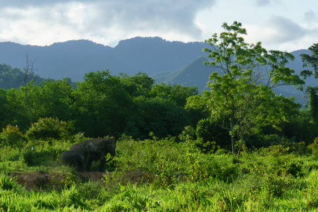 group of wild elephant with family in the forest of national park. thailand.