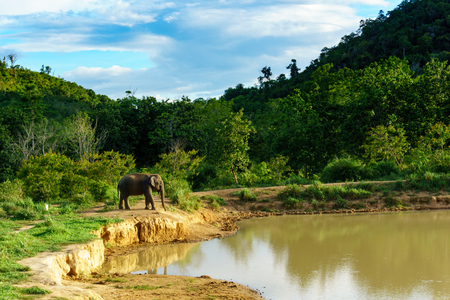 beautiful amazing scene of one large wild elephant is standing before going to swim in a large pool inside a national park with blue sky and cloud. Stock Photo