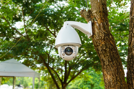 white security cctv camera installed on the branch of tree