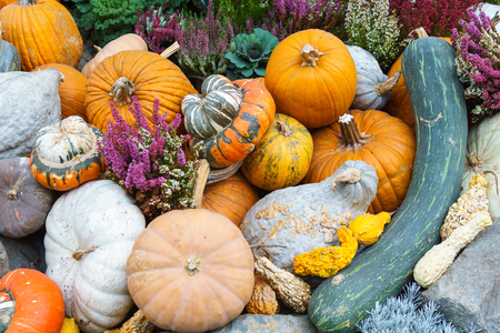 pile of various kind of pumpkin and some vegetable