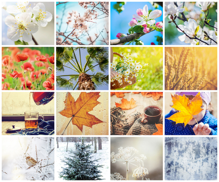 A collage of photographs is the seasons. Selective focus.