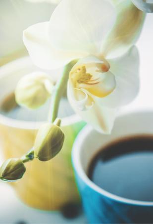 coffee bean. a Cup of coffee. selective focus. Reklamní fotografie - 116516372