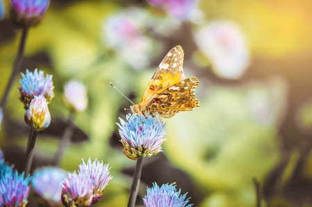 Butterfly on a flower. Selective focus. nature.
