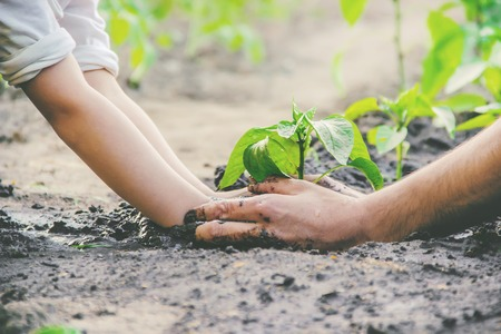 A child plants a plant in the garden. Selective focus. nature. Stock Photo