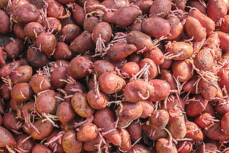 planting potatoes. garden. selective focus Organic food nature Archivio Fotografico