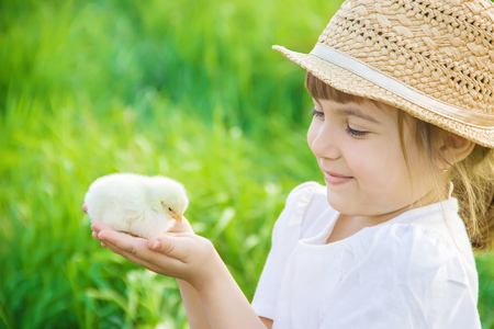 The child holds a chicken in his hands. Selective focus. nature.