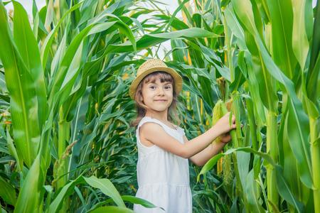 kind op het gebied van maïs. een kleine boer. selectieve aandacht. Stockfoto