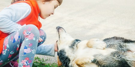 the dog is the friend of man. Gives a paw to the child. nature.